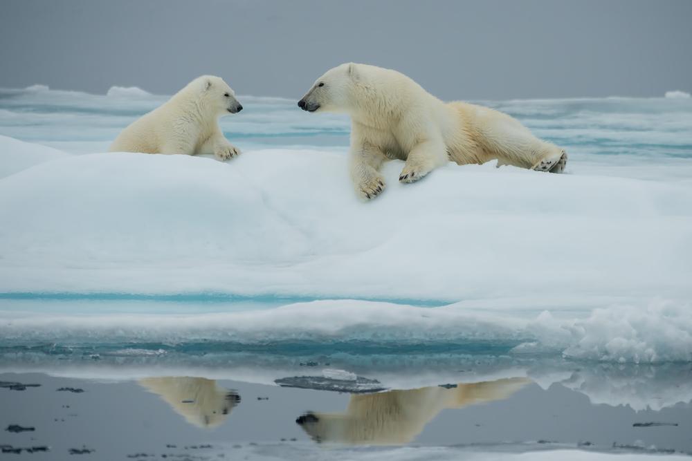 Clima: dalla firma dell'accordo di New York ai fatti