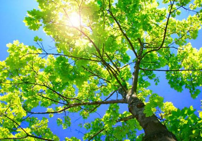 Aste CO2: il Rapporto del terzo trimestre pubblicato dal GSE presenta alcune novit�