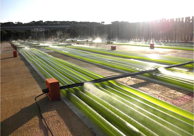 Teregroup sbarca in Italia per la realizzazione di impianti per la produzione di Biodiesel con le alghe